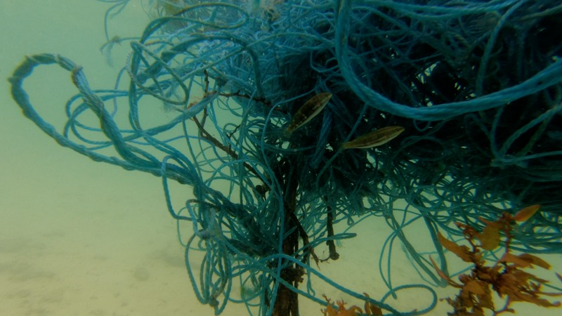 Plastikmüll und die Folgen für unsere Tierwelt